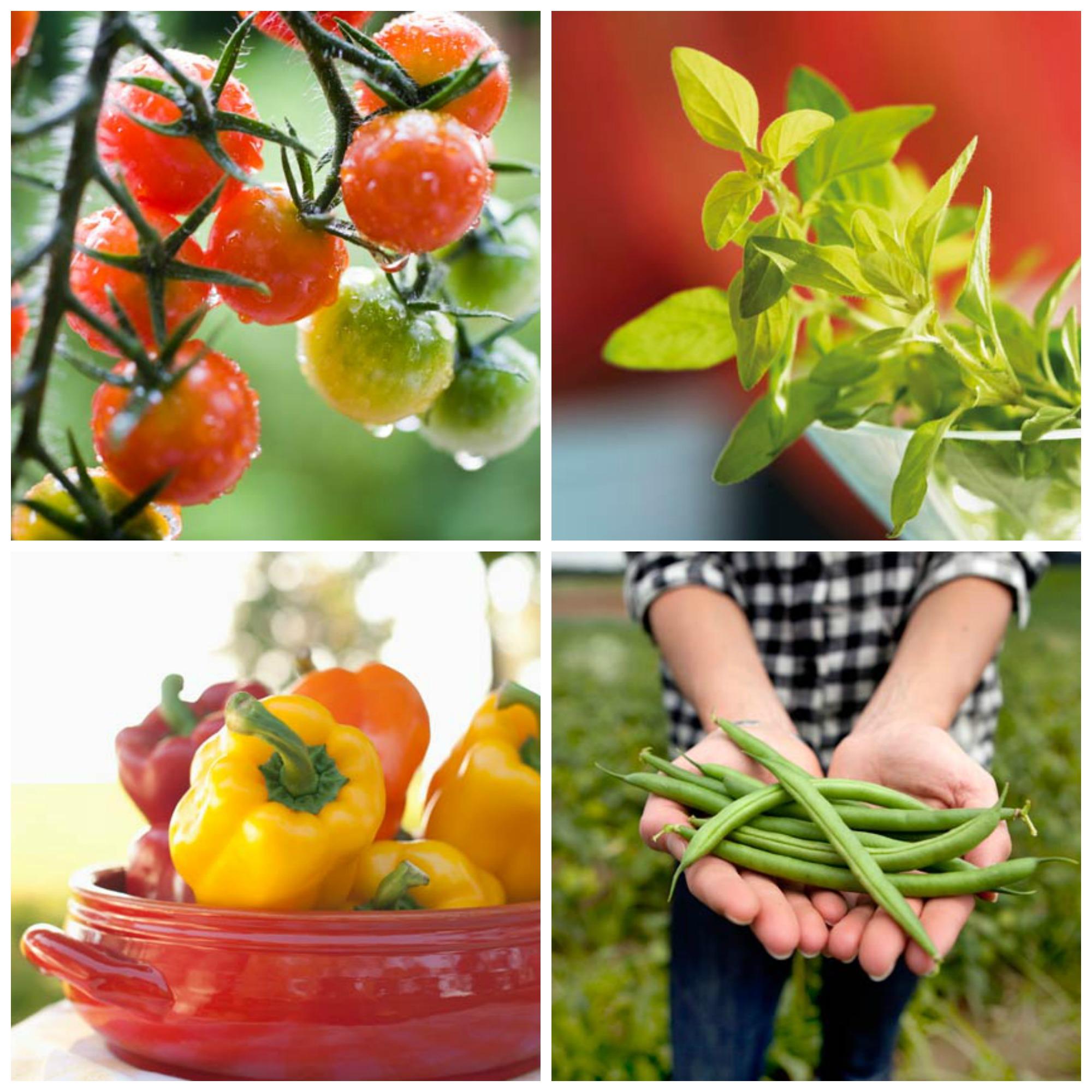 Las 10 hierbas y verduras más sencillas de plantar en casa