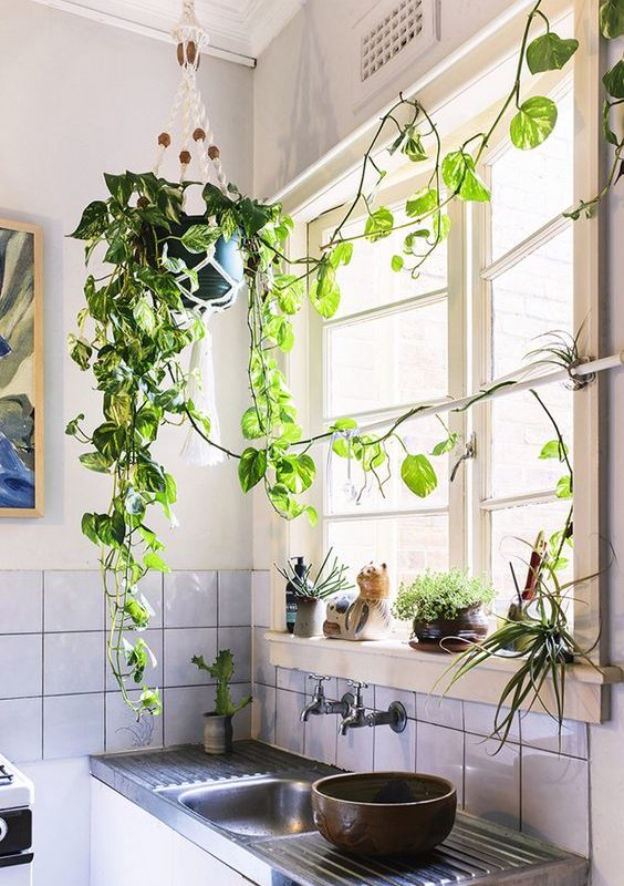 Cómo añadir naturaleza viva a tu cocina